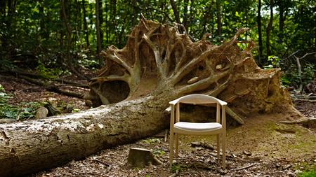 503_oak_fallen_tree.jpg